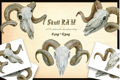 RAM's skull. 4 images.watercolour painting