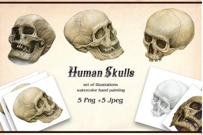 Watercolor Human Skull