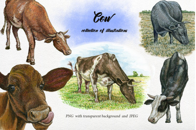 Watercolor Cow Clipart.animals clipart,