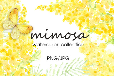 Mimosa. Watercolor collection.