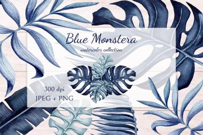 Blue Monstera