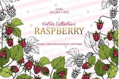 Raspberry Vector Collection