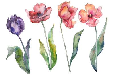 Bouquet of prometheus tulip Watercolor png