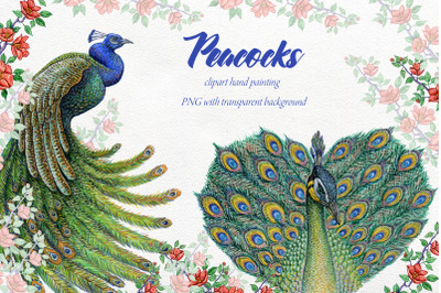 Peacock birds . Watercolor Clipart. Flower backgrounds