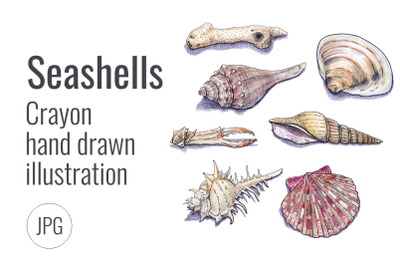 Hand drawn sea shells
