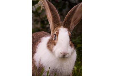 Bunny Rabbit #7 Nature Stock Photography