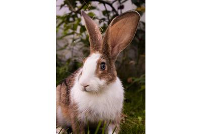 Bunny Rabbit #8 Nature Stock Photography