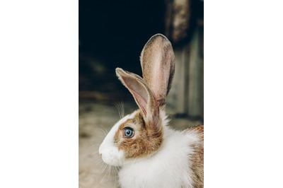 Bunny Rabbit #9 Nature Stock Photography