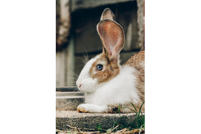 Bunny Rabbit #10 Nature Stock Photography