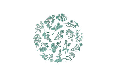 Vector hand drawn medical herbs in circle shape illustration