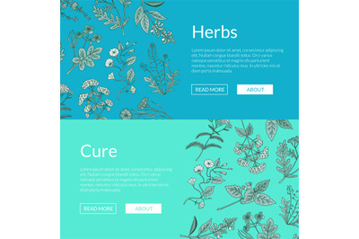 Vector hand drawn medical herbs web banner templates illustration