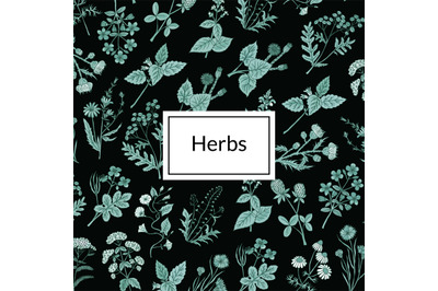 Vector hand drawn medical herbs background illustration