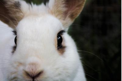 Bunny Rabbit #15 Nature Stock Photography