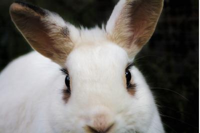 Bunny Rabbit #16 Nature Stock Photography