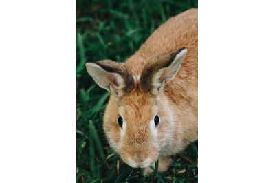 Bunny Rabbit #20 Nature Stock Photography