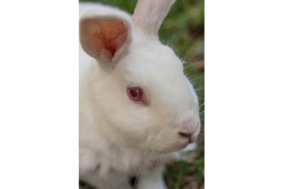 Bunny Rabbit #21 Nature Stock Photography