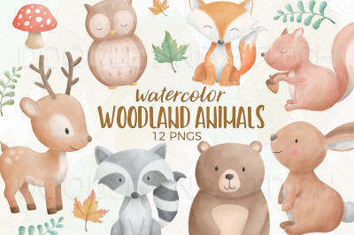 Woodland Animal Watercolor Illustrations