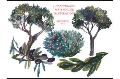 5 hand drawn watercolor plants