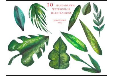 10 watercolor tropic leaves