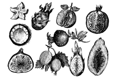 10 Hand drawn ink fruits