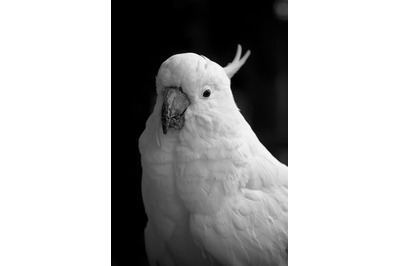 Parrot #1 Black and white Nature Stock Photography
