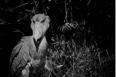 Bird #7 Black and white Nature Stock Photography