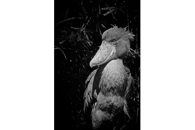 Bird #9 Black and white Nature Stock Photography