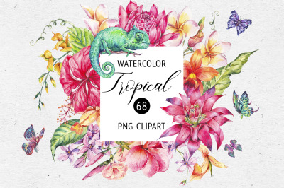 Summer Tropical Flowers Collection
