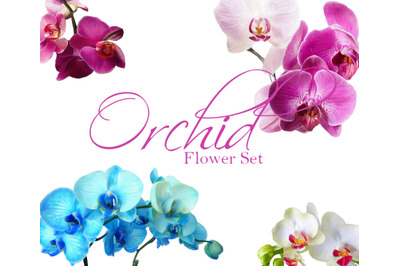 Orchid Flower File Set. 4 Orchids Drawings/Illustrations in Watercolor