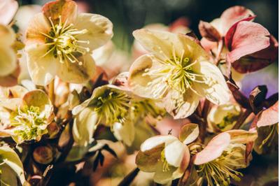 Tree Blossom #10 - Nature Stock Photography