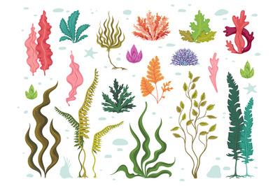 Seaweeds. Sea underwater plants, ocean coral reef and aquatic kelp, ha