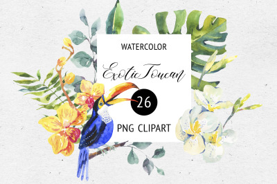 Watercolor Summer Png Toucan Clipart