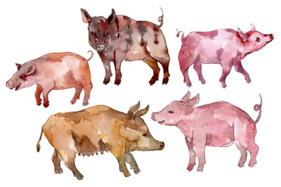 Farm animals: pig (boar) Watercolor png