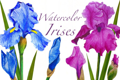 Watercolor flowers irises