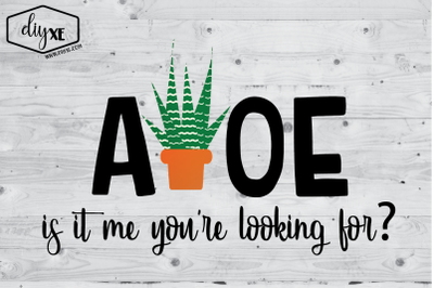 Aloe Is It Me You're Looking For?