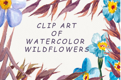 set of watercolor wildflowers