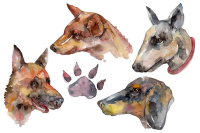 Farm animals dog head Watercolor png