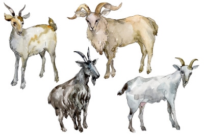 Agriculture: goat Watercolor png
