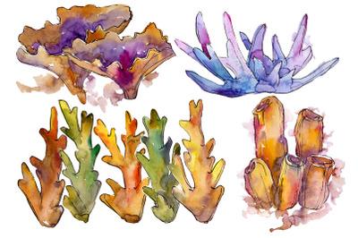Corals joy of nature watercolor png