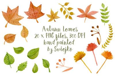 Autumn Leaves, watercolor clipart
