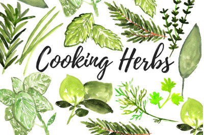 Watercolor cooking herbs