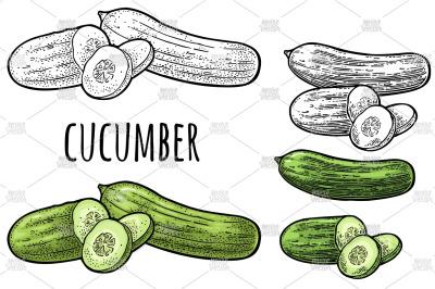 Cucumbers vintage engraving