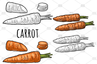 Carrots engraving
