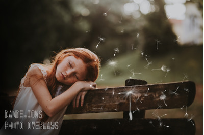 Dandelions Photo Overlays