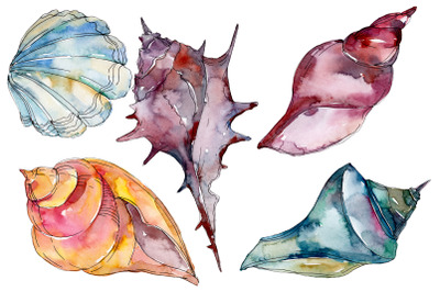 Sea shells watercolor png