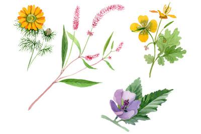 Herbals Watercolor png