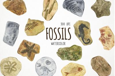 Watercolor Fossils Clipart, Fossils Clip Art