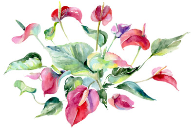 Spathiphyllum red Watercolor png