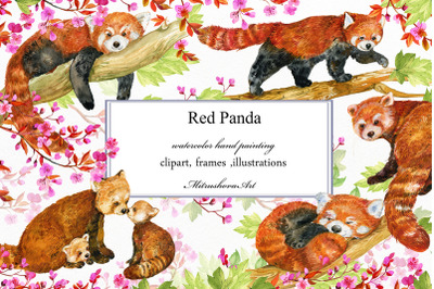 Red Panda ,watercolor illustrations