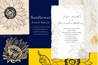 Sunflower. Sketch outline graphics